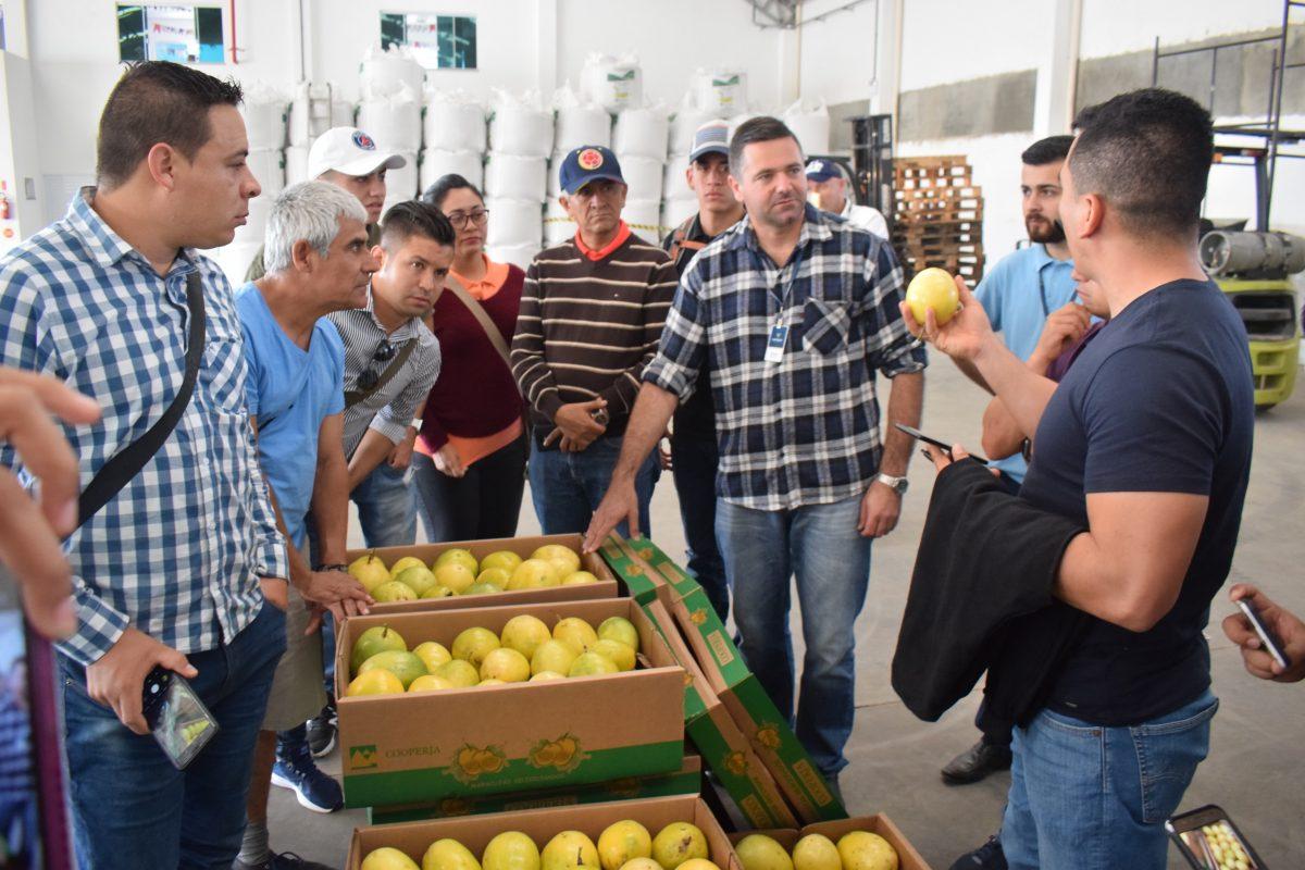 Colombianos estão fazendo intercâmbio nos municípios da região sul