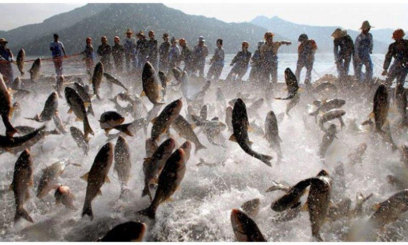 SC cria linha de crédito para maricultores e pescadores