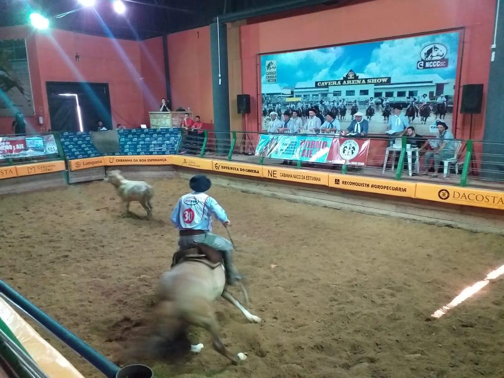 Qualificação para Expointer: Araranguá tem credenciadora de Cavalos Crioulos
