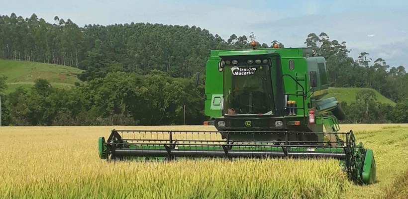Pesquisa do IBGE aponta novo recorde na produção de grãos em 2021