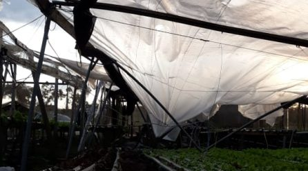 Epagri calcula prejuízos na agricultura da região