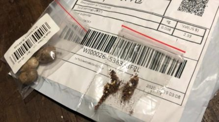 Agência americana identifica sementes chinesas