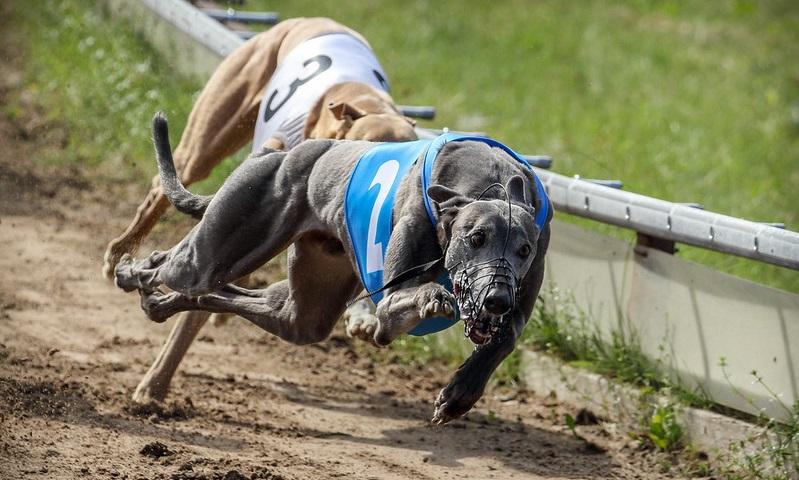 EXCLUSIVO: Polícia prende homens e resgata cães em corrida ilegal em Araranguá
