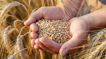 SC e RS se unem para estimular o plantio de cereais de inverno